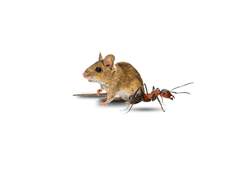 identify pests and rodents