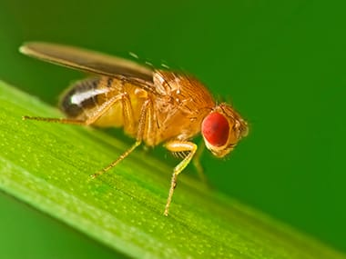 fruit fly on a blade of grass in a wilmington lawn