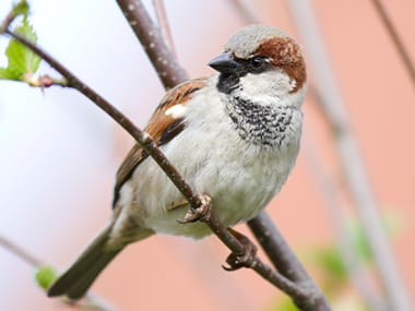 sparrow sitting on a branch outside a plano home